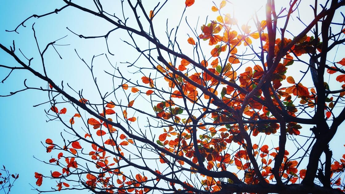 pexels-photo-89290